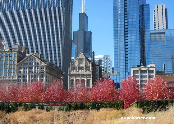 Skyline with Sears Tower Nov 2010